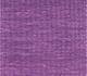 African Violet / African Violet